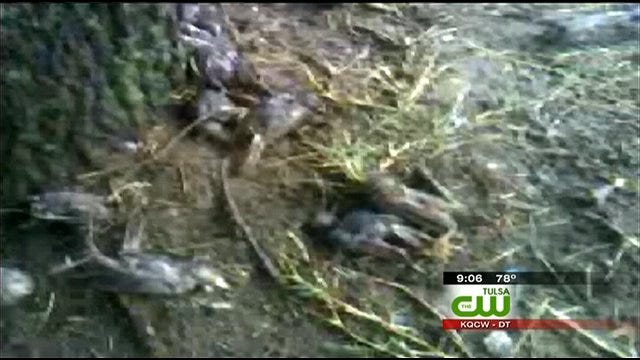 Hundreds Of Dead Birds Found Outside Broken Arrow Walmart
