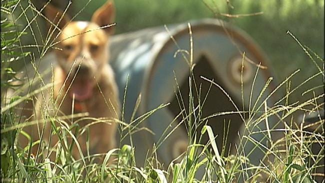 Health Problems Force Tuskegee Man To Give Up More Than 50 Dogs