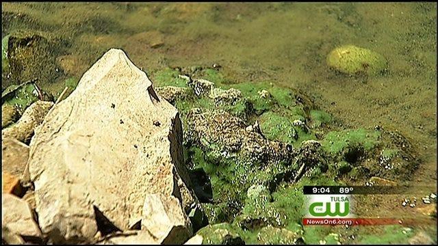 Algae Found At Grand Lake A Powerful Poison