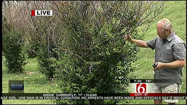 Save Crepe Myrtles With The Dirt Dude