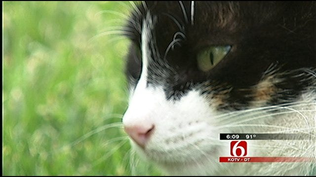 Tulsa's Philbrook Museum Launches New 'Cat Cams'