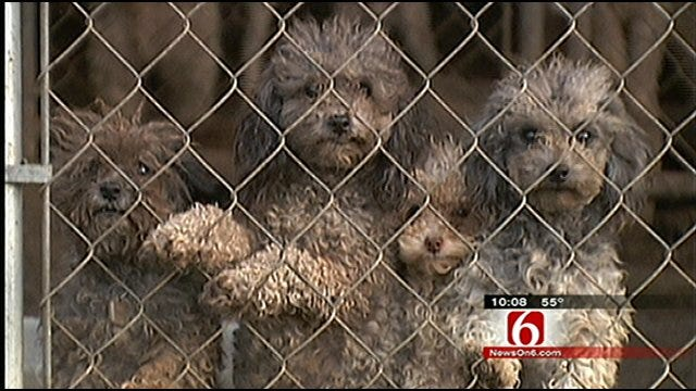 Oklahoma Pet Breeders' Taxes Questioned