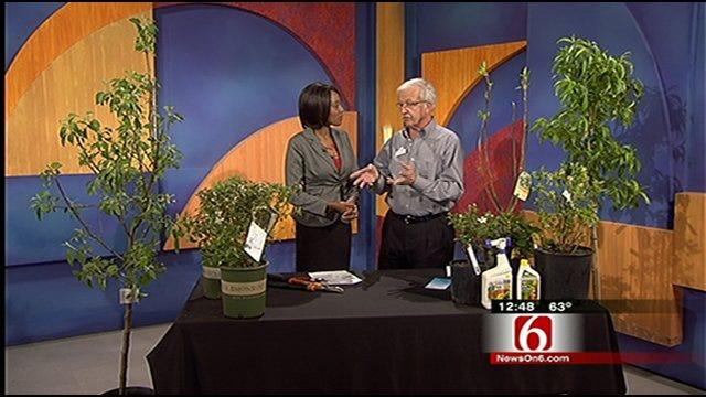 Master Gardeners Offer Free Gardening Classes