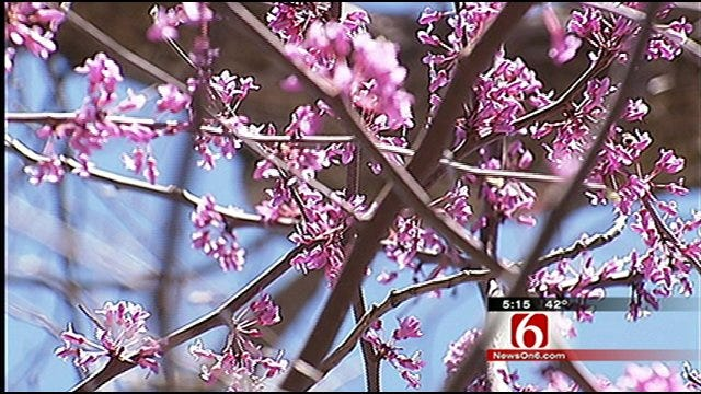 Oklahoma's Own: Springtime In Full Bloom At Redbud Valley Nature Preserve