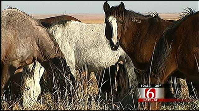 Oklahoma Spending Millions Of Taxpayer Dollars To House Wild Horses