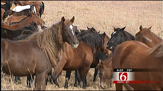 Osage County Ranch Home To Oklahoma's Wild Horses