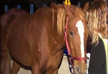 Loaded Horse Trailer Overturns On Tulsa Highway