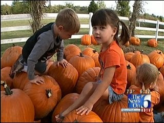 Corn Maze, Pumpkin Patches Rite Of Fall In Bixby