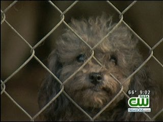 Alleged Nowata Puppy Mill Owner To Stand Trial