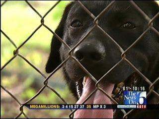 Lost Tulsa Dog Finds Temporary Home In Politics