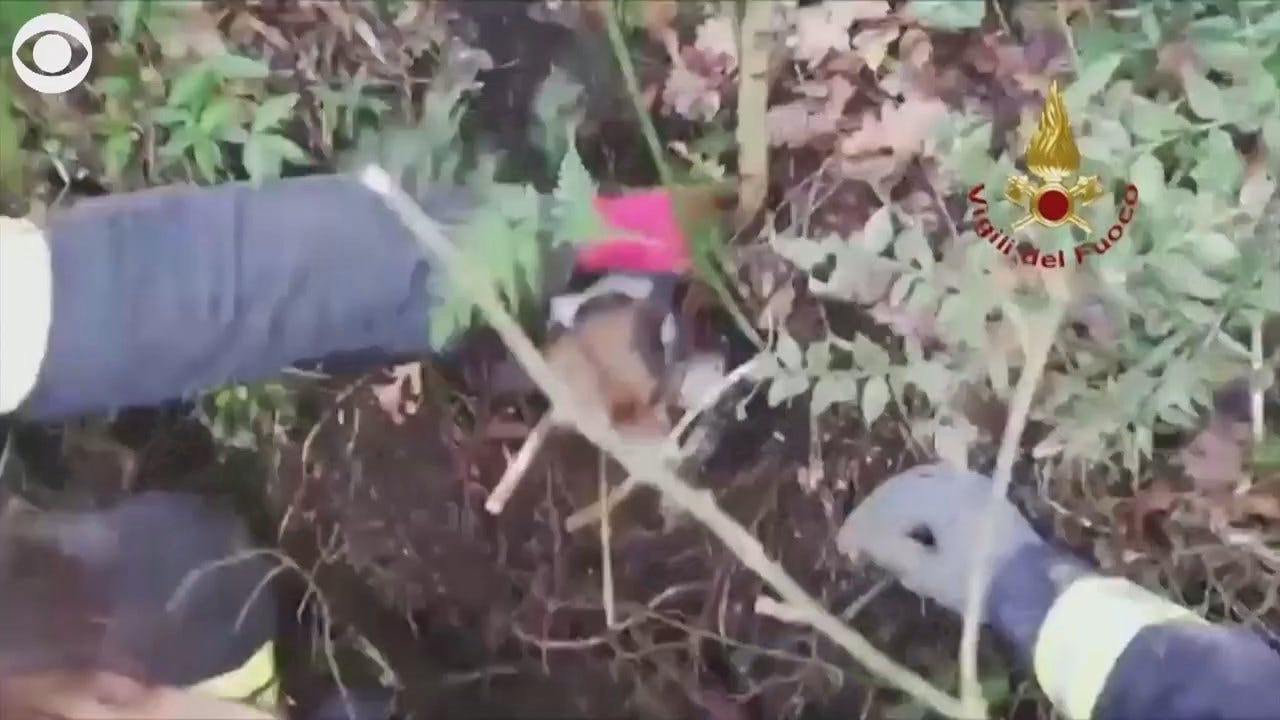 WATCH: Puppies Rescued From Hole In Italy