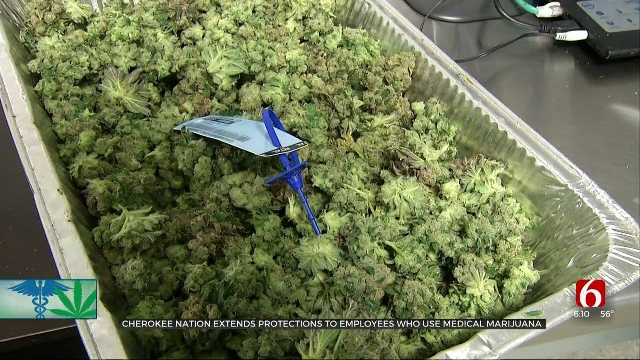 Cherokee Nation Government Employees Now Protected From Medical Marijuana Discrimination