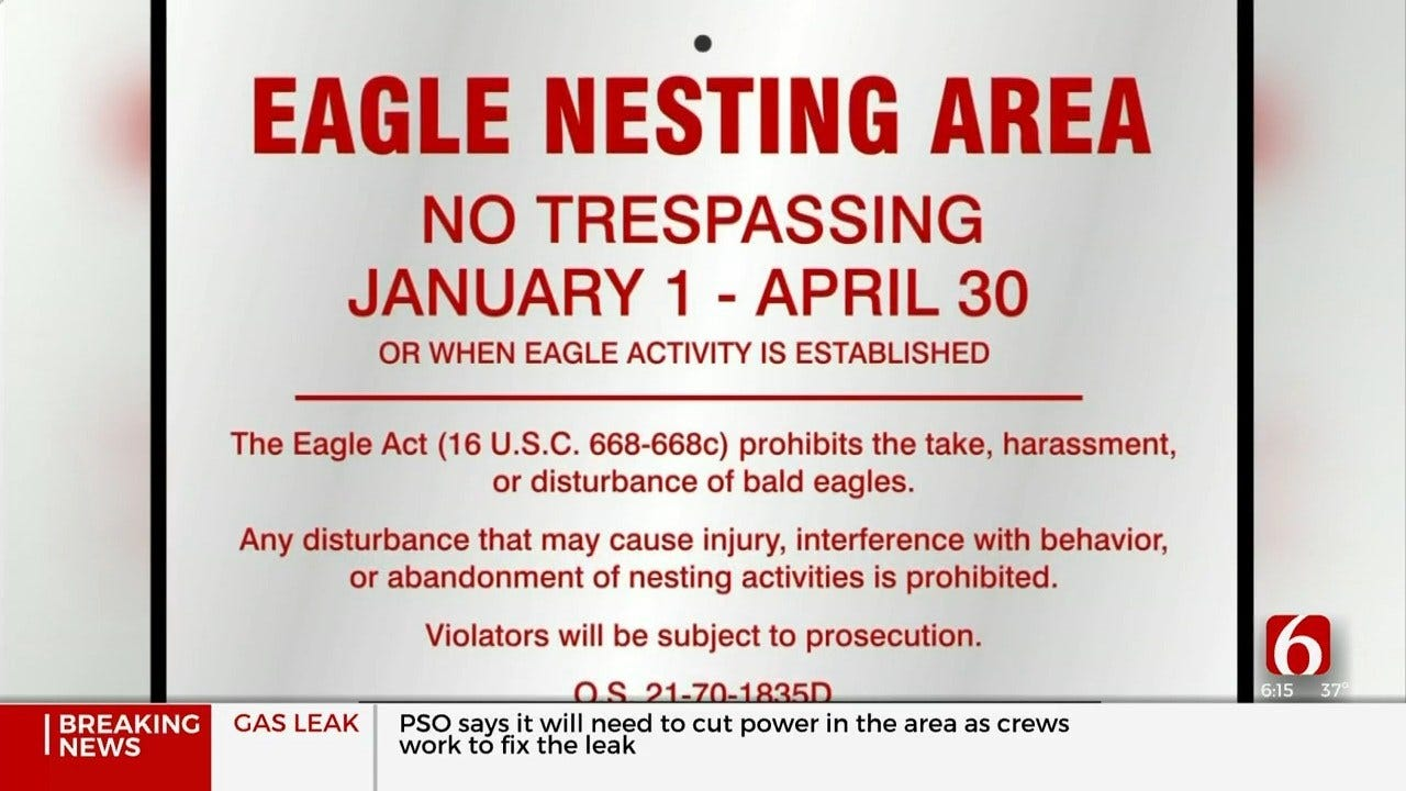 GDRA Warn People Not To Disturb Bald Eagle Nest At Grand Lake