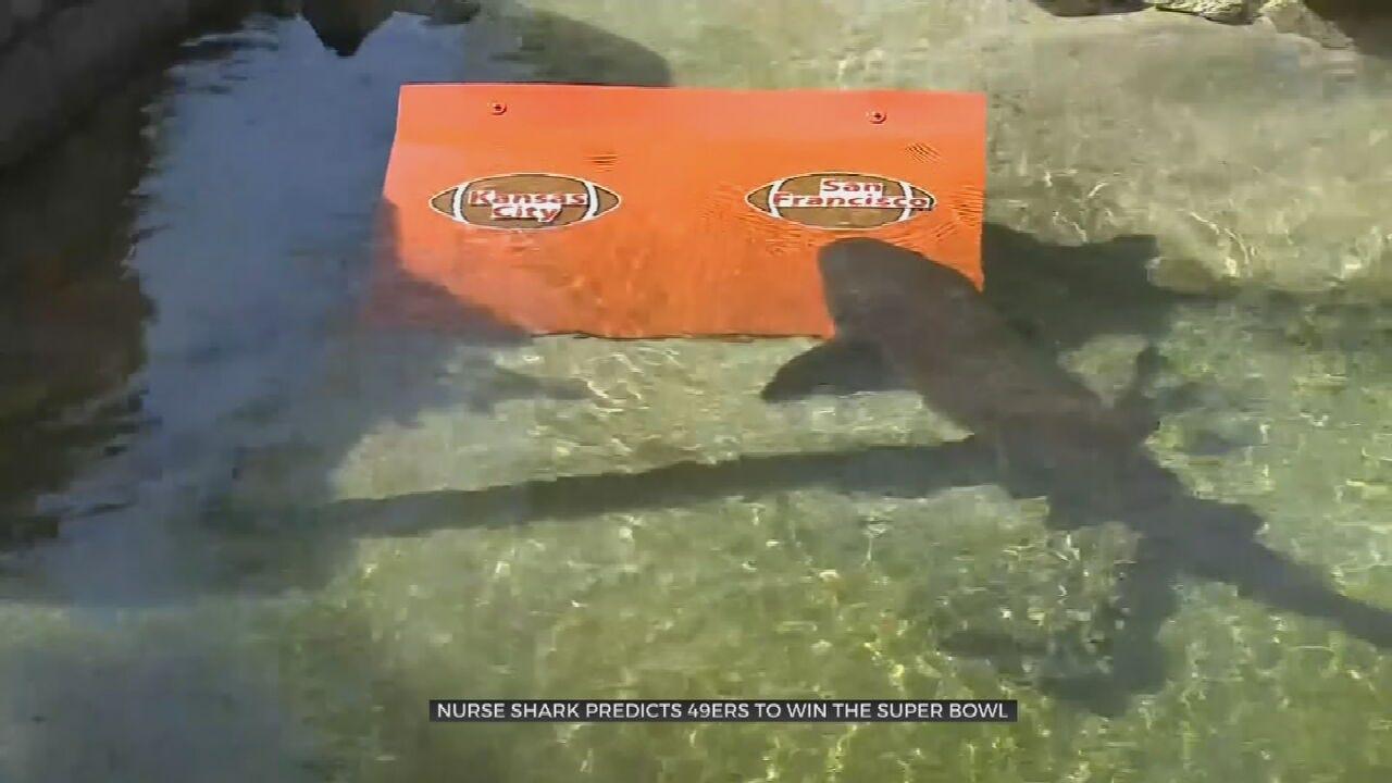 WATCH: Shark Predicts Super Bowl Winner
