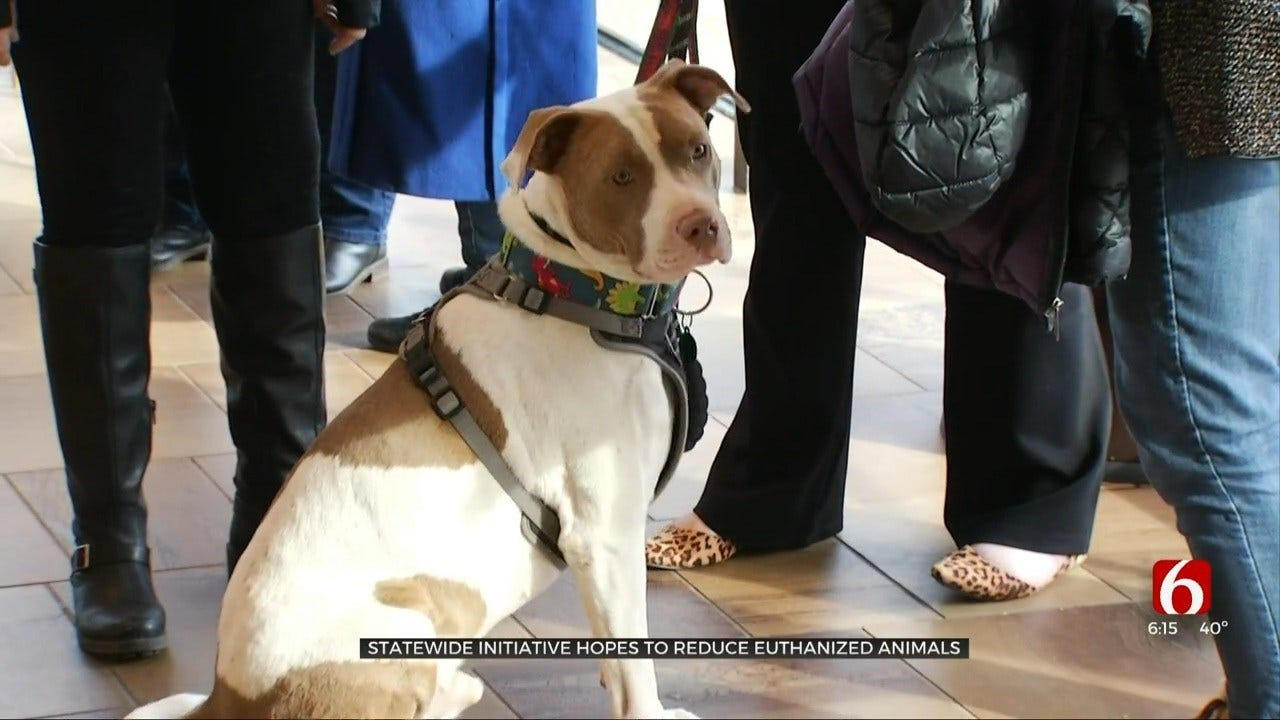 Group Starts New Initiative To Reduce Animal Euthanasia