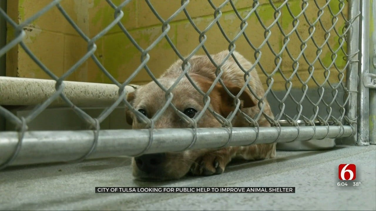 City To Ask Community Help To Improve Tulsa Animal Welfare Shelter