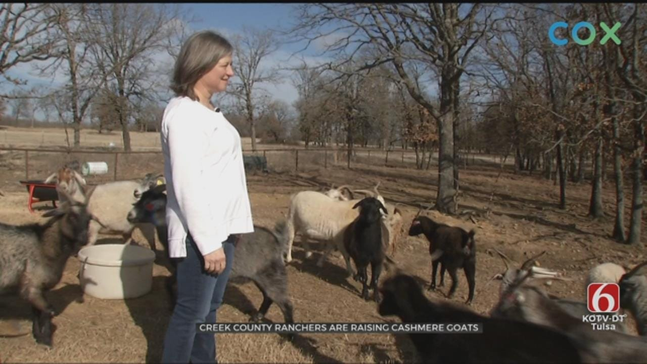 Creek County Ranchers Raise Cashmere Goats