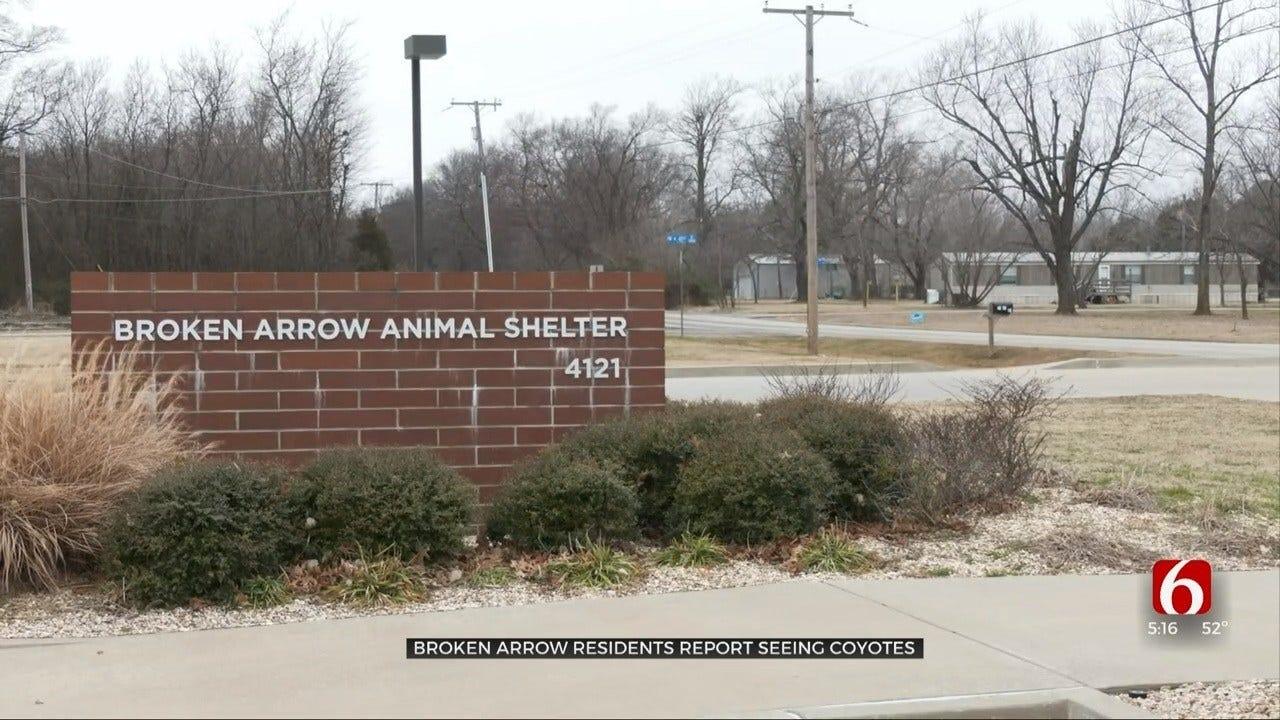 Broken Arrow Animal Control Gives Tips On Discouraging Coyotes