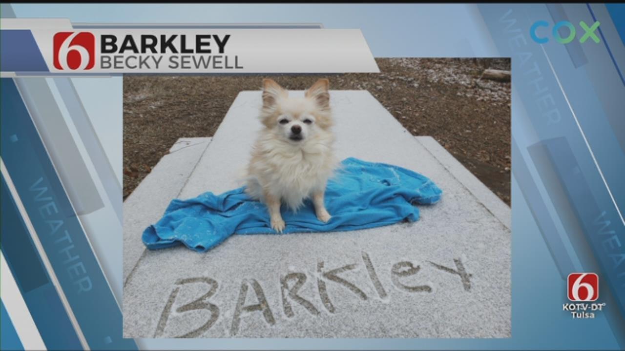 Barkley The Snow Dog