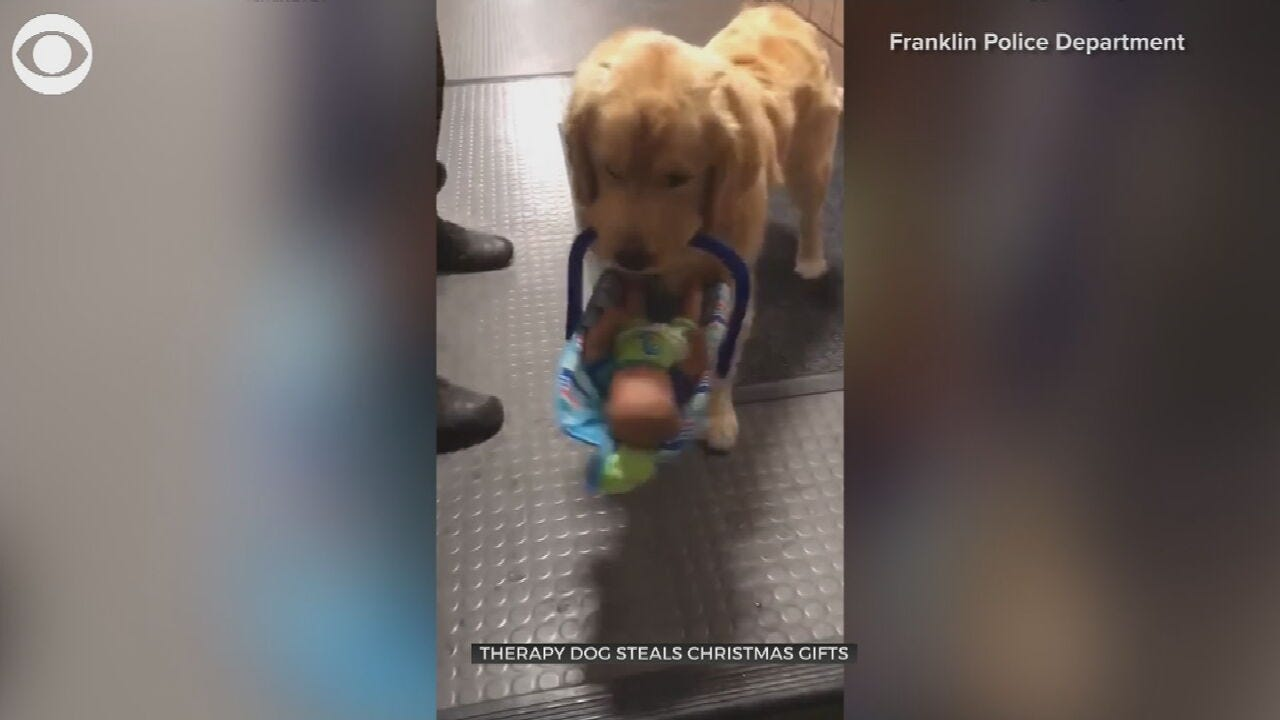 WATCH: Dog 'Steals' Toy Drive Donations