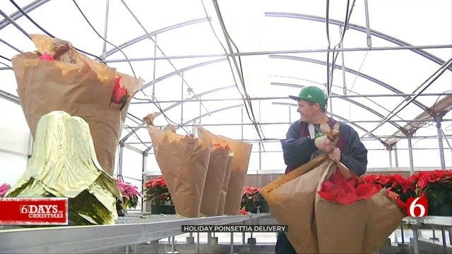 A New Leaf Spreads Holiday Cheer With Poinsettia Delivery
