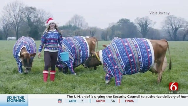 6 In The Morning Fun: Dairy Farmer Dresses Cows In Christmas Sweaters