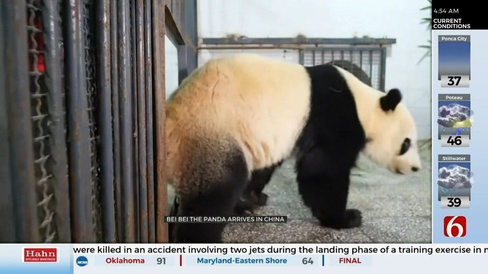 Bei Bei Arrives At New Home In China