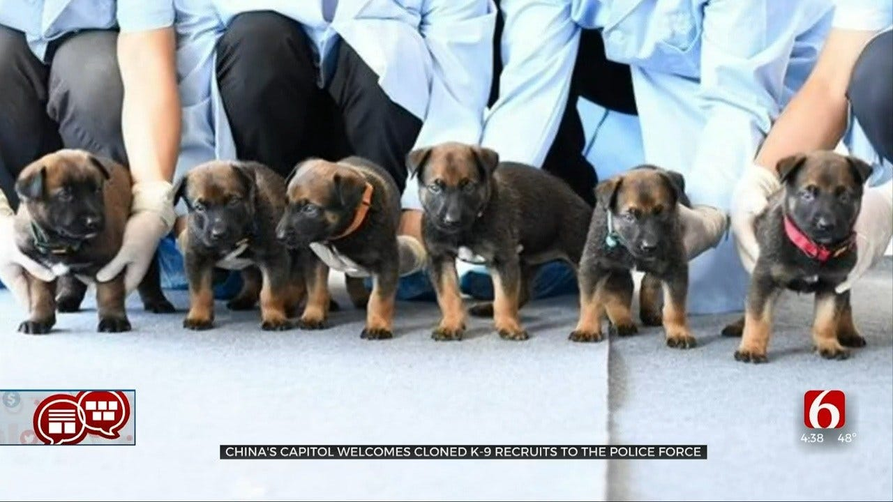 Something To Talk About: Cloned Puppies?