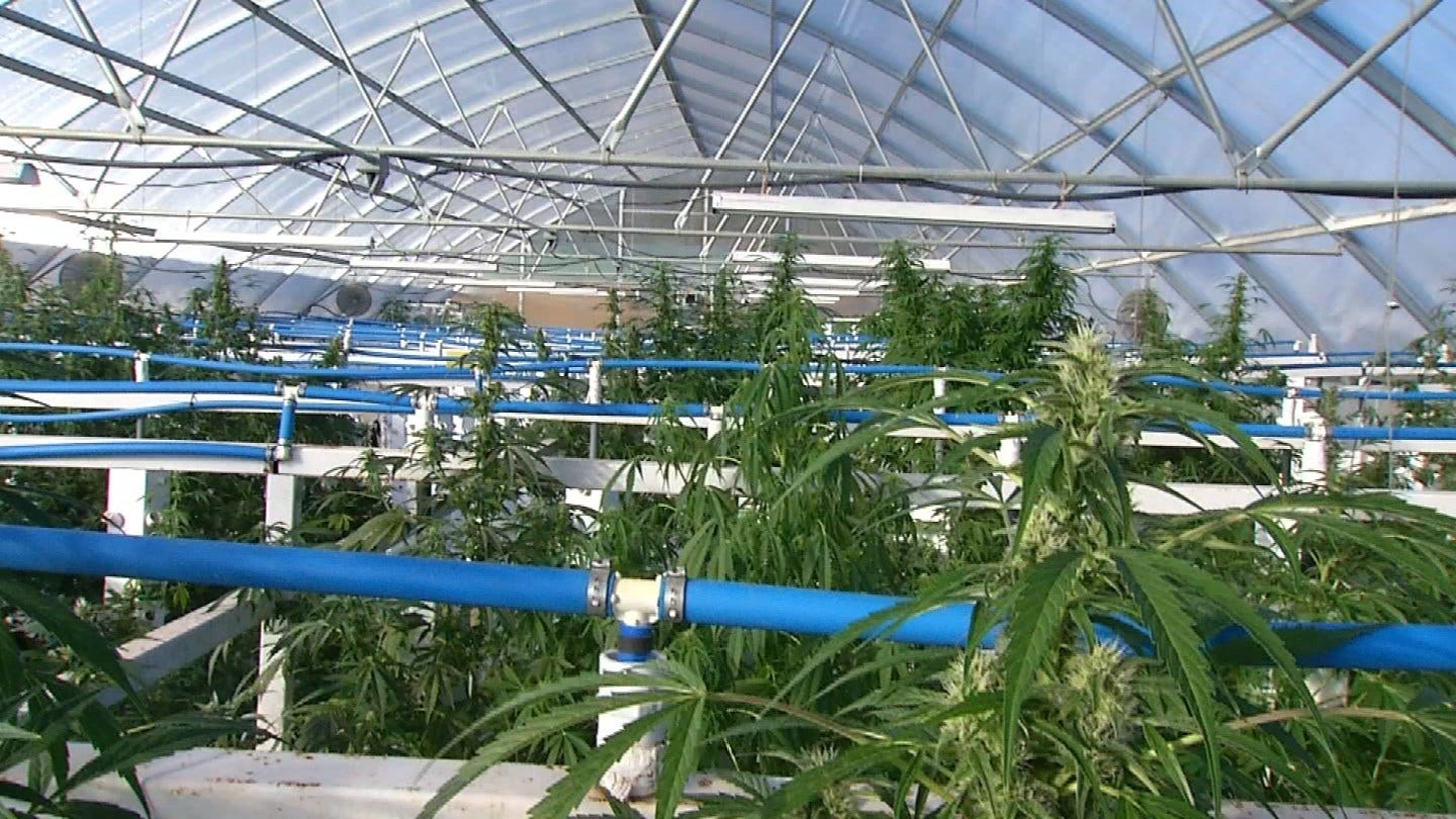More Than 5% Of Oklahomans Now Have Medical Marijuana Cards