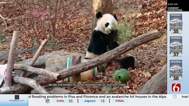 WATCH: The Smithsonian National Zoo Says Goodbye To Bei Bei