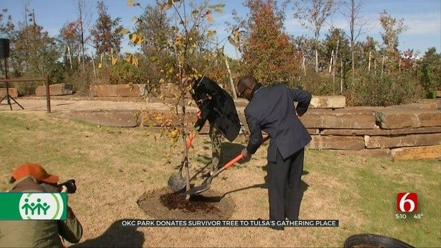 OKC Survivor Tree Finds New Home At Tulsa's Gathering Place