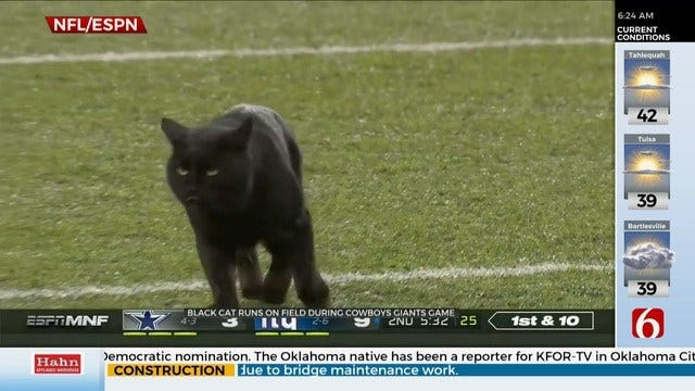 WATCH: Black Cat Rushes The Field During Football Game
