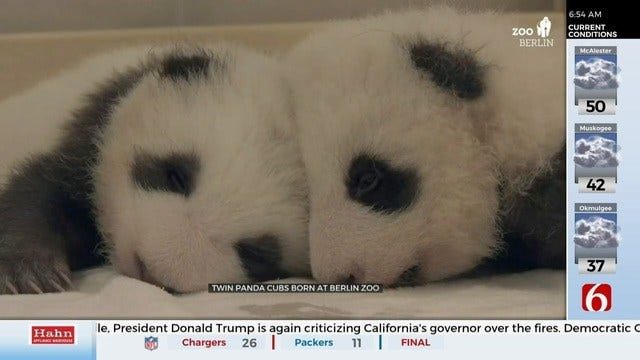 WATCH: Panda Cubs Meet For The 1st Time