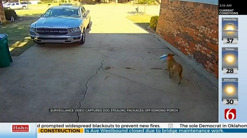 WATCH: Edmond Porch Pirate Dog Caught On Camera