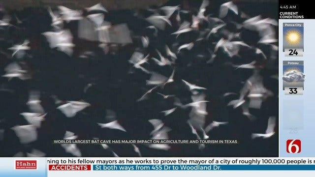WOW: Millions Of Bats Live in World's Largest Bat Cave
