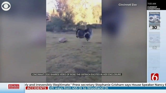 WATCH: Rose The Ostrich Loves Mornings