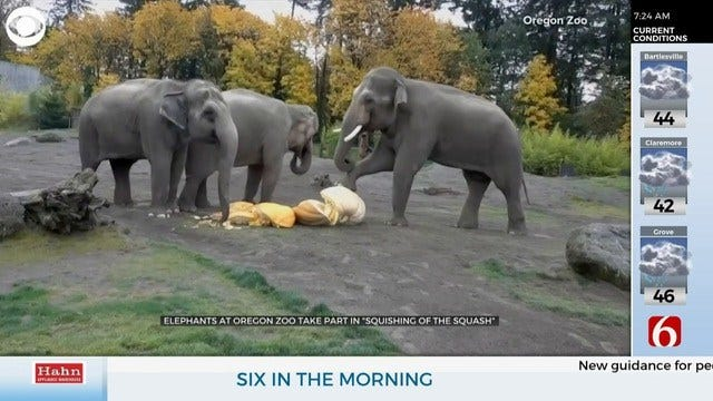 WATCH: Elephants Take Part In The Squishing Of The Squash