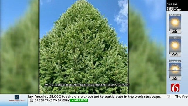 Christmas Tree Has Been Chosen For The White House