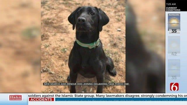 Meet Pepper, Oklahoma Task Force 1's Newest Member