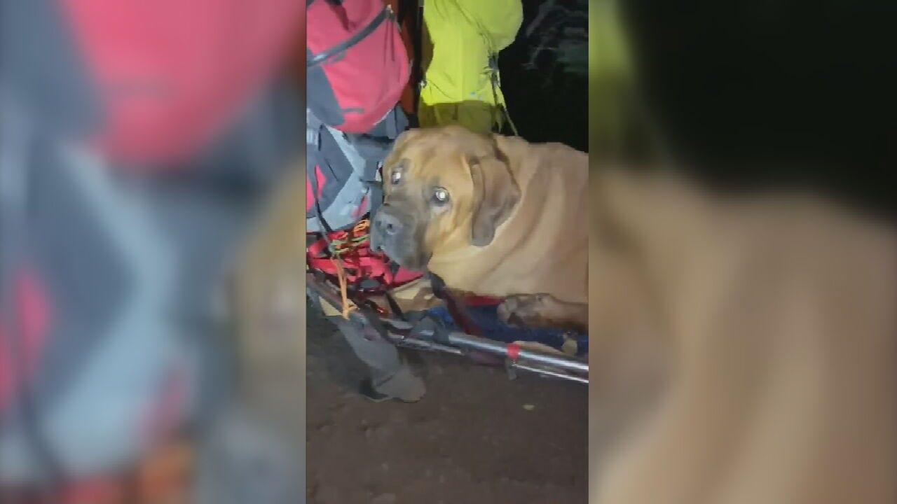 Animal Rescues: Giant Cobra Found In Thailand; Big Dog Saved In Utah