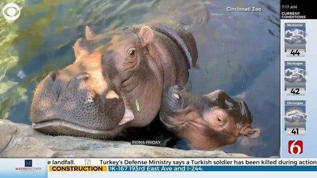 WATCH: Fiona The Hippo Gives Her Mom Kisses