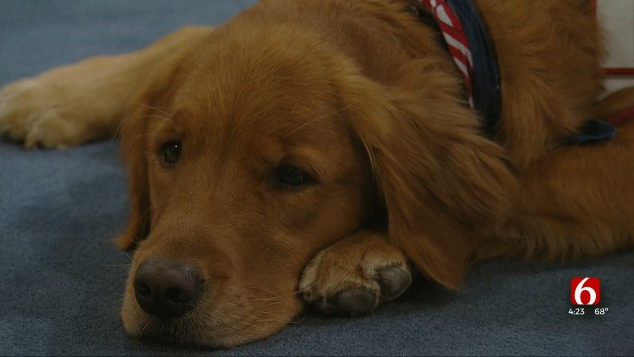 Nonprofit Therapetics Discuss Benefits Of Service Dogs