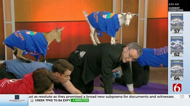 WATCH: The 6 In The Morning Team Tries Goat Yoga
