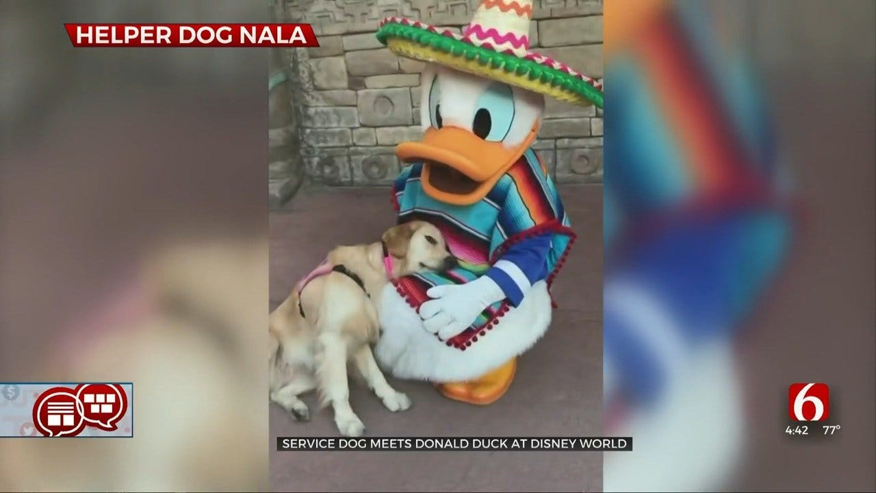 Something To Talk About: Service Dog Becomes Friends With Donald Duck
