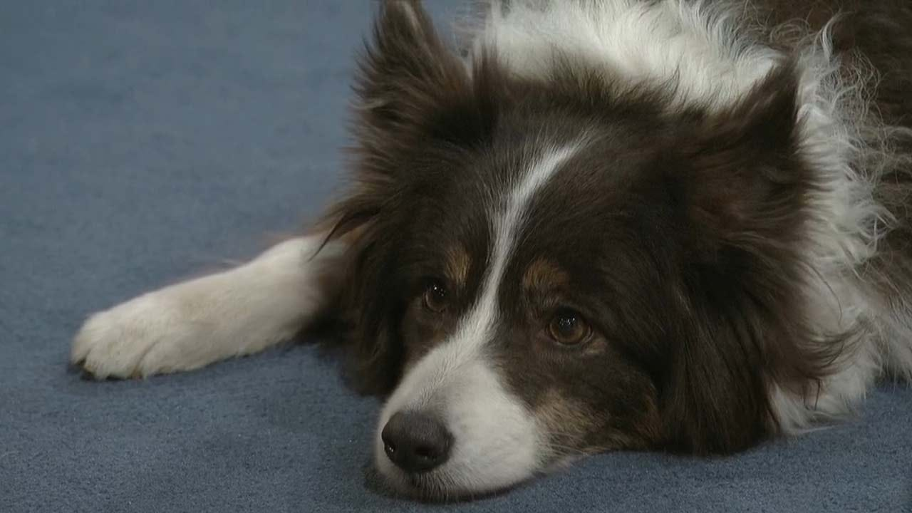 K-9 Manners Expert Offers Helpful Tips For Training Your Dog