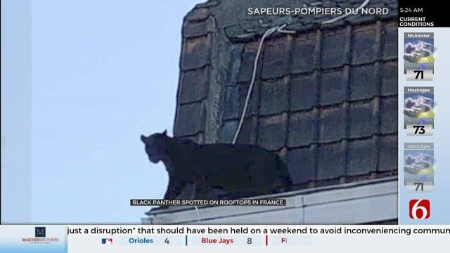 WATCH: Panther Spotted On Rooftop In France