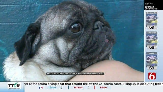 Instagram Famous Dog Returned To Owner