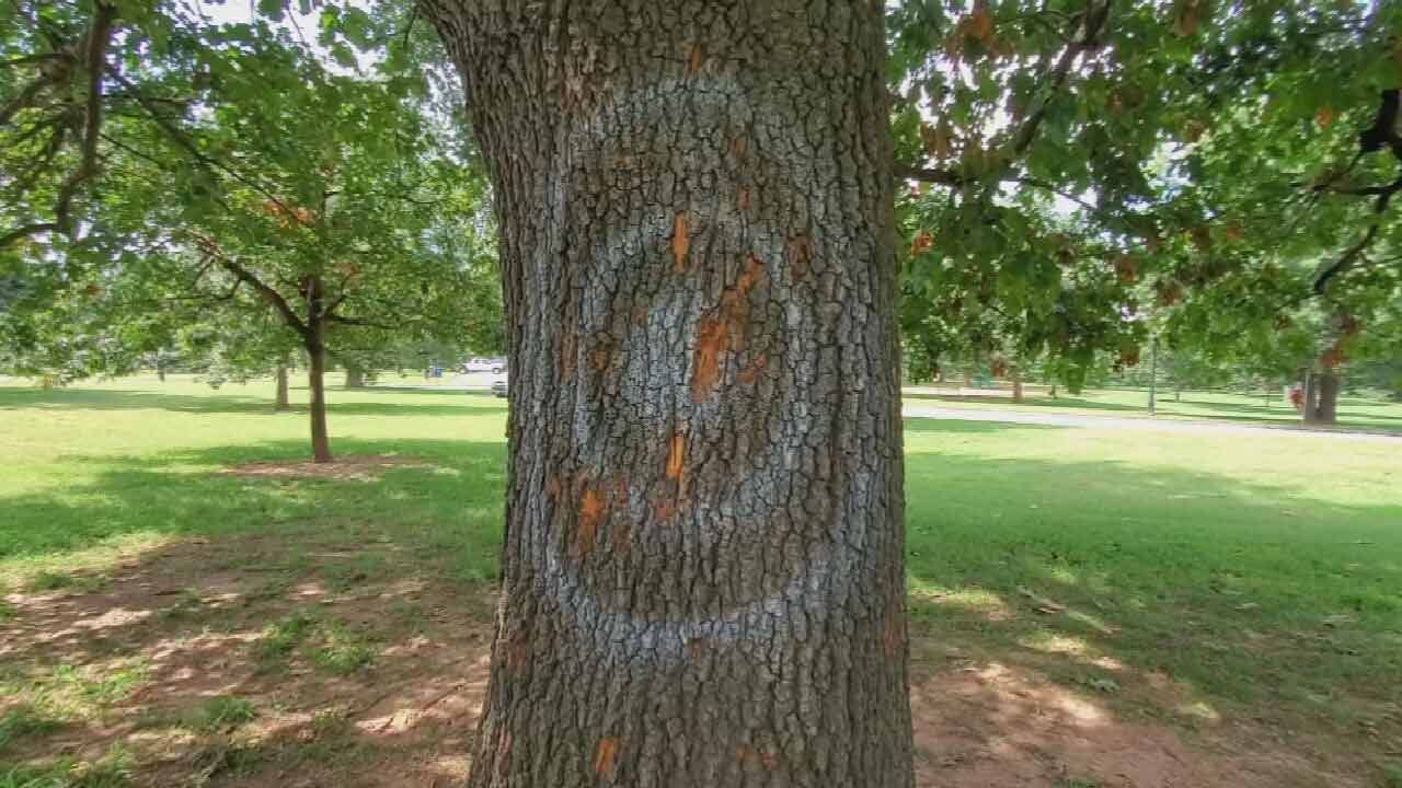 Axe Throwers Damage One Of Tulsa Woodward Park's Oldest Oak Trees
