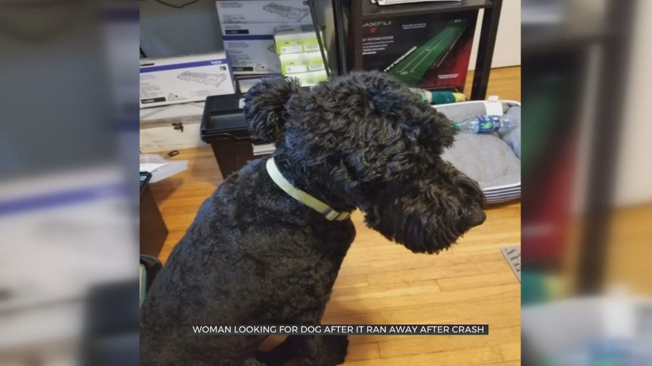 Tulsa Woman Needs Help Finding Dog After Car Wreck