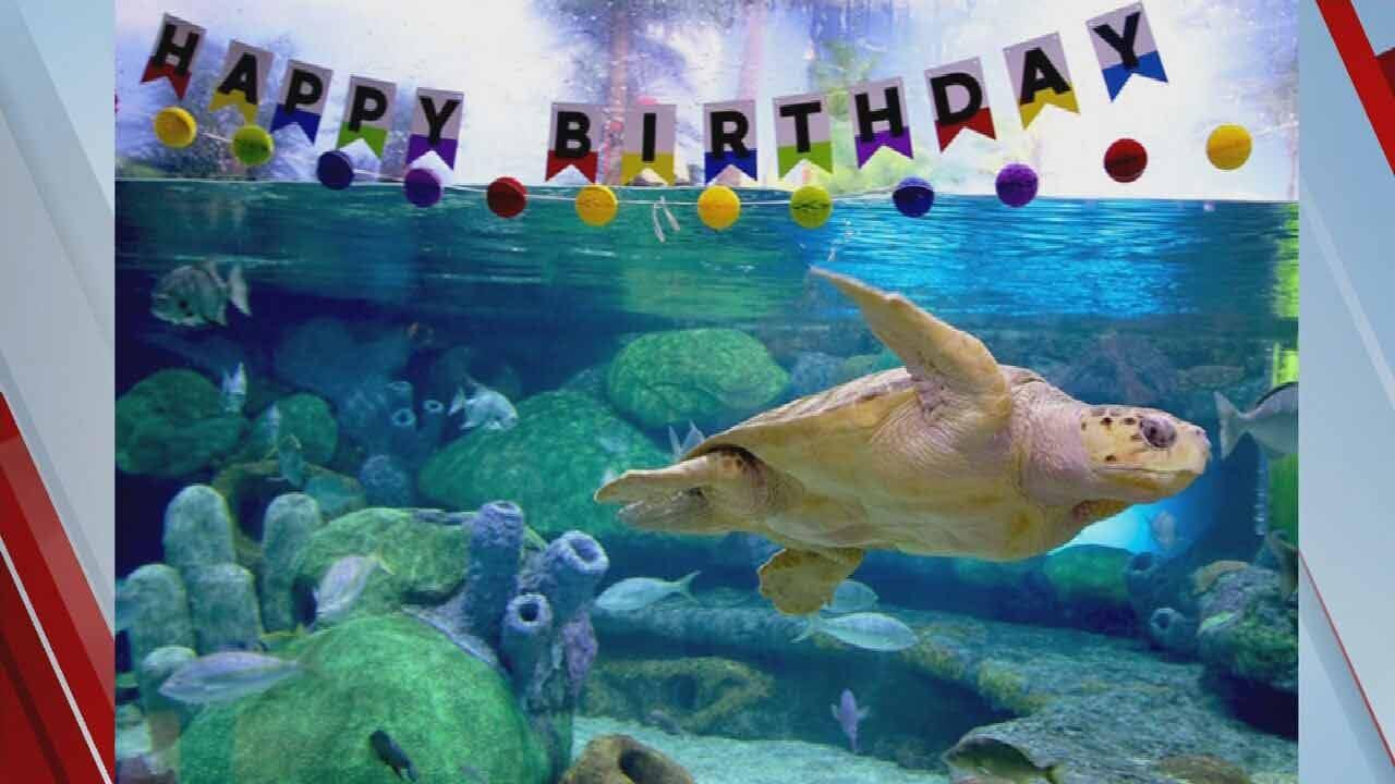 Help Name The Loggerhead Sea Turtle At The Oklahoma Aquarium